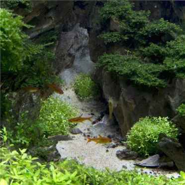 Relaxing aquascaping ideas for inspiration 22