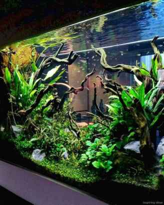 Relaxing aquascaping ideas for inspiration 42