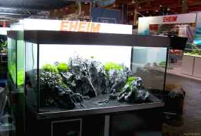 Relaxing aquascaping ideas for inspiration 5