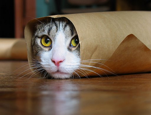 An adorable kitten rolled in paper, only its face is visible.
