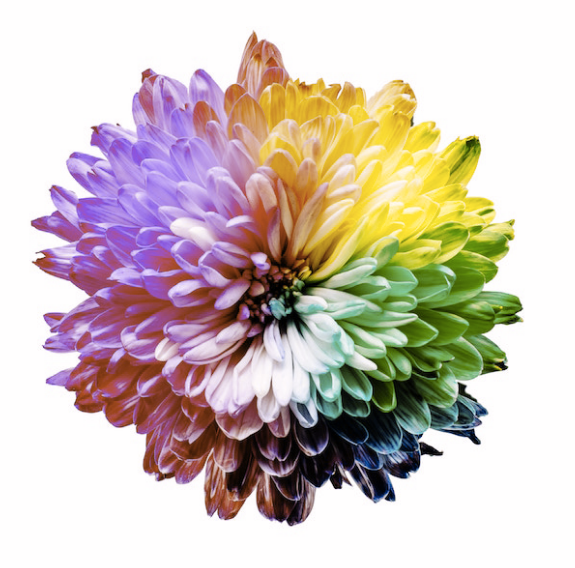 A flower depicting the color spectrum in Protanomaly