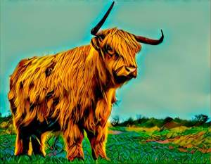 A buffalo with asymmetric horns.