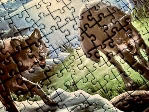 Portion of the puzzle - a closeup of two wolves.