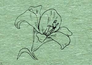 Sketch of a flower.