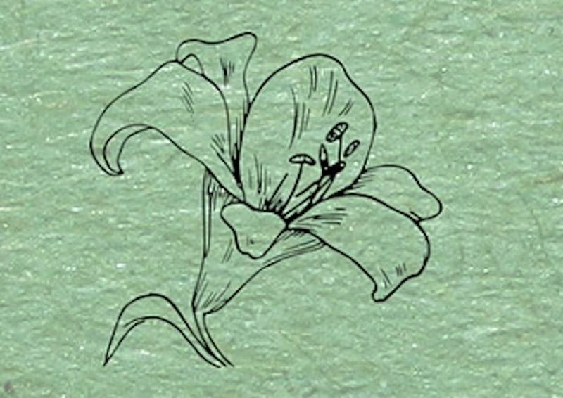 Sketch of a flower.
