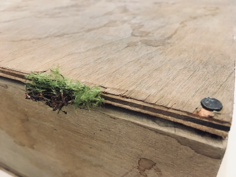 Closeup of a wooden box sealed with a nail. Grass hands off of it like it had been buried.
