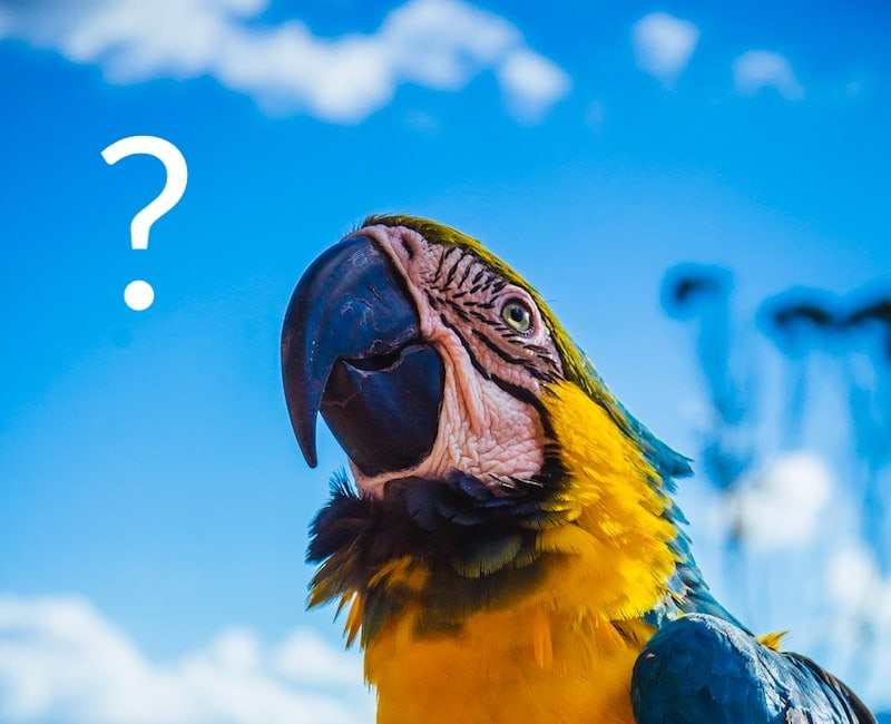 Parrot gazing at a question mark.