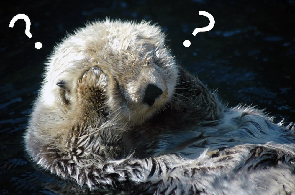 An otter covering its eye with its paws, its head surrounded by question marks.