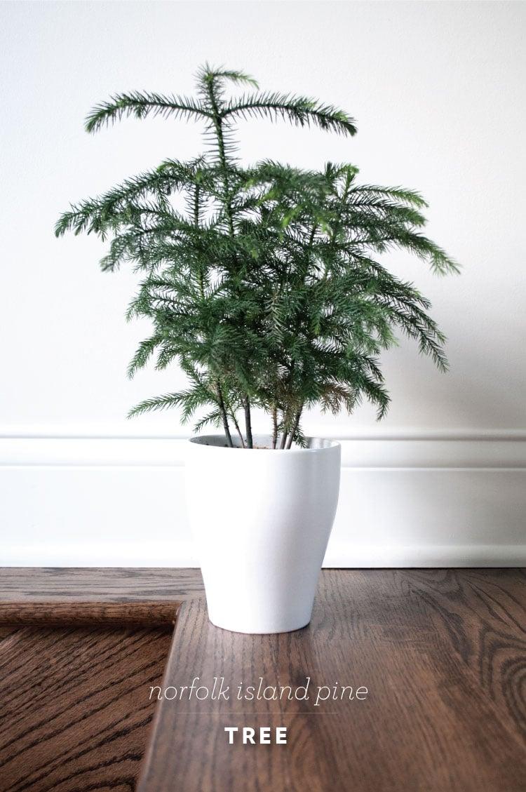 rft_plant11