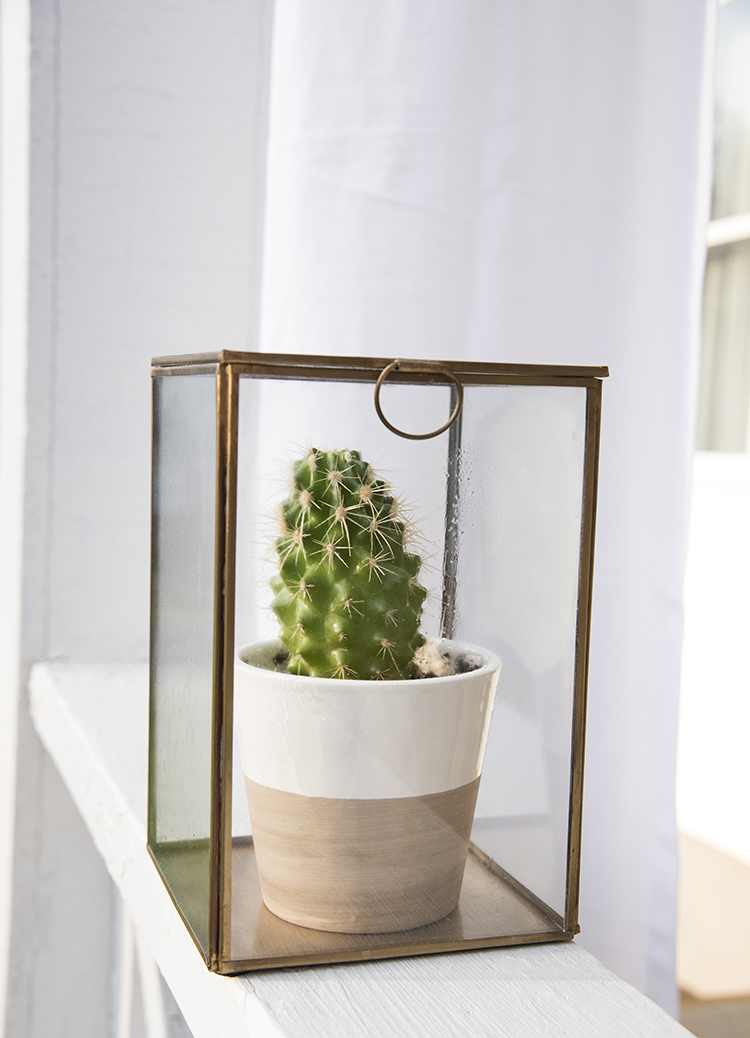 Cactus in a Brass and Glass Box
