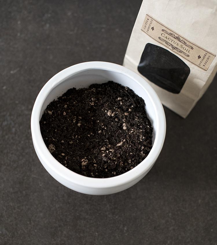 cactus-and-succulent-soil
