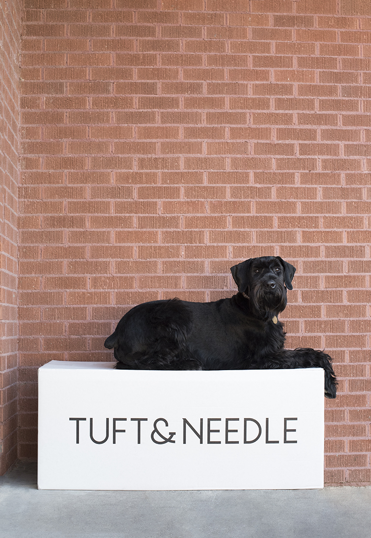 tuftneedle-collaboration