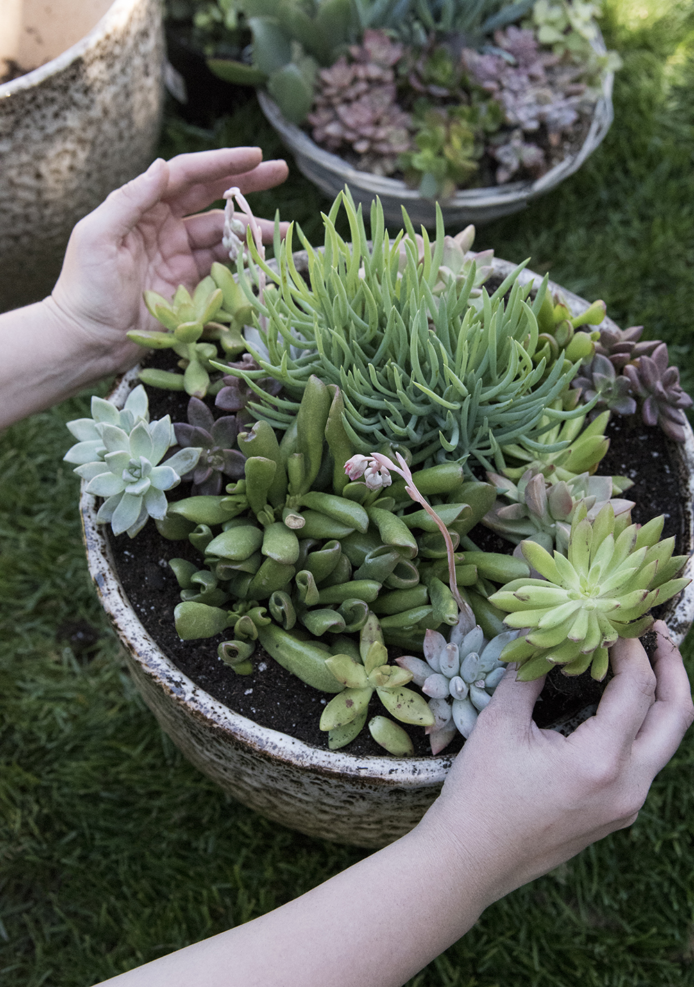 Outdoor Succulent Planter DIY - roomfortuesday.com