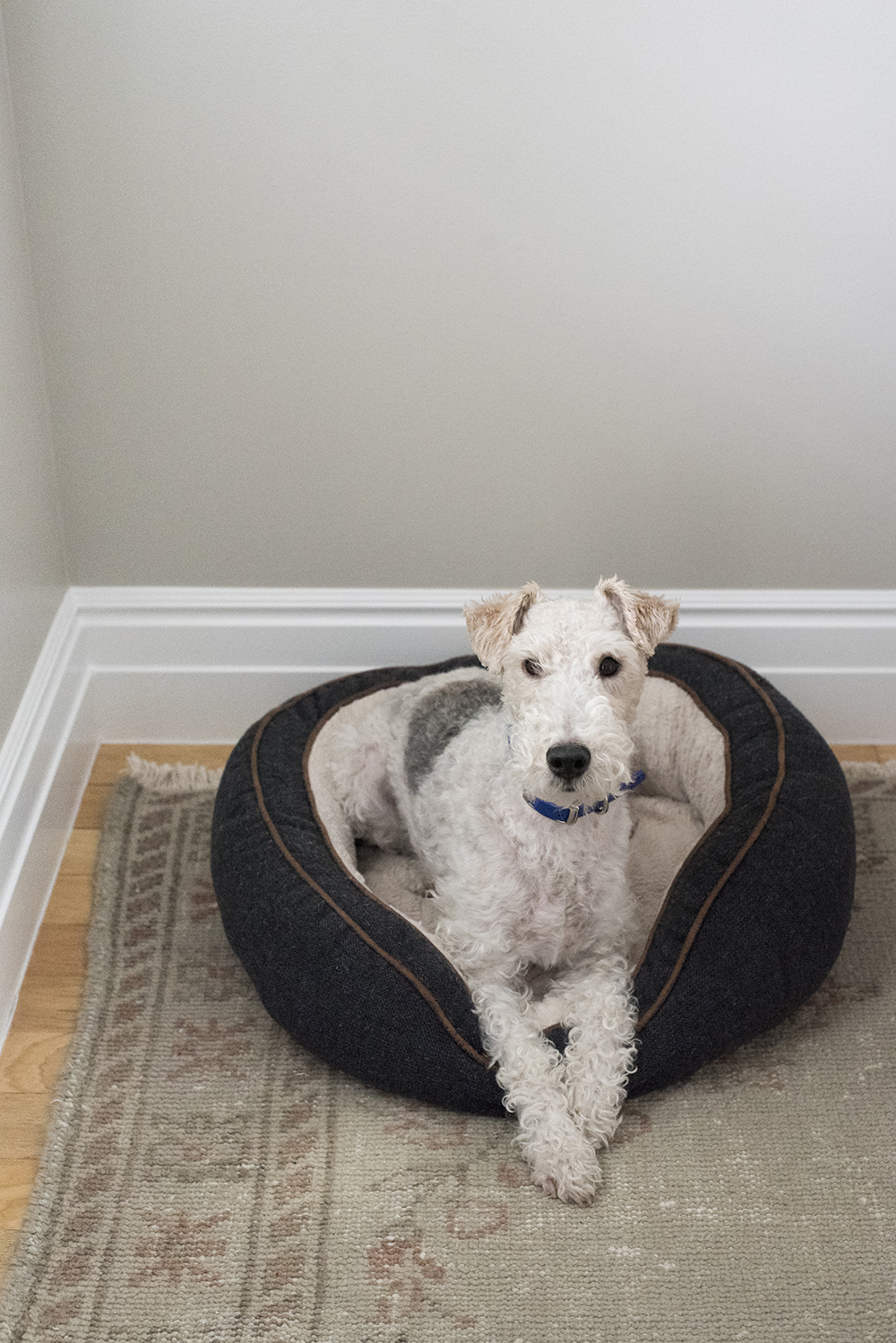 Amazon Finds : Dog Beds - roomfortuesday.com