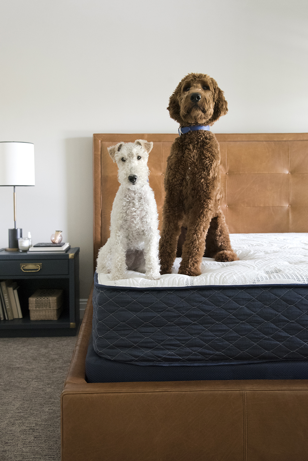 Irish Doodle And Wire Fox Terrier Room For Tuesday