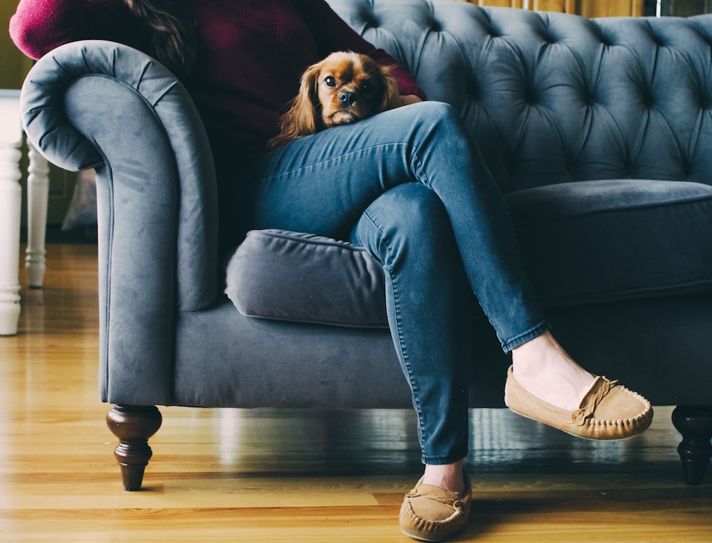 How To Have Pets With Roommates In NYC