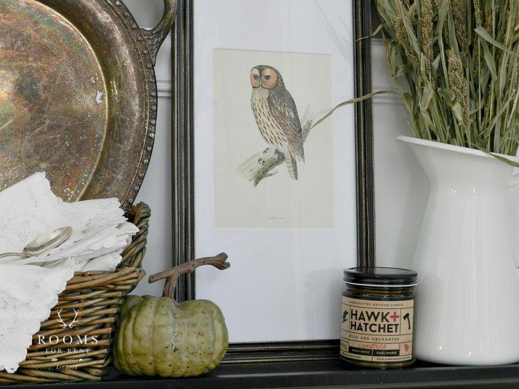 owl + candle