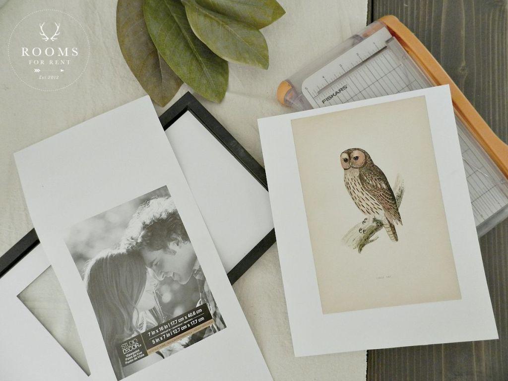 owl printed