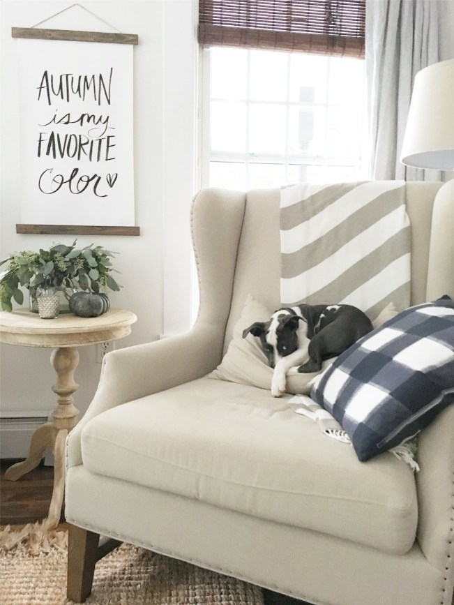 We Got a Puppy | Rooms FOR Rent Blog