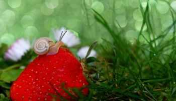 animal grass snail macro