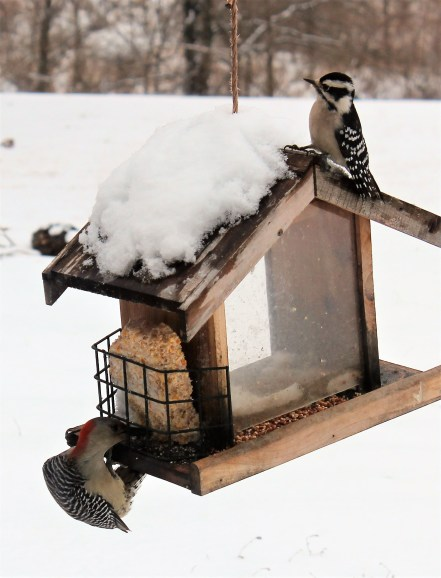 birds on snowy feeder