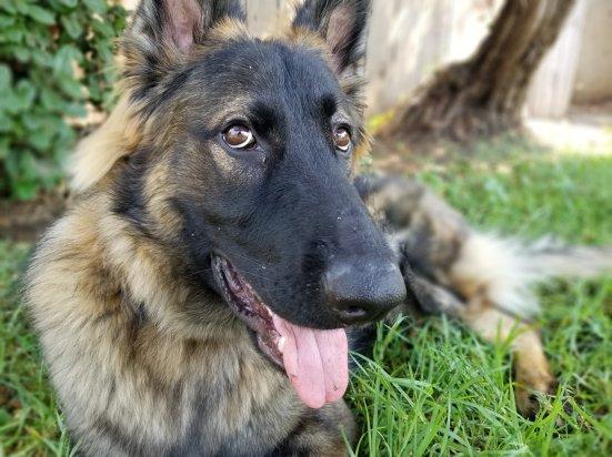 Ontario dog trainer
