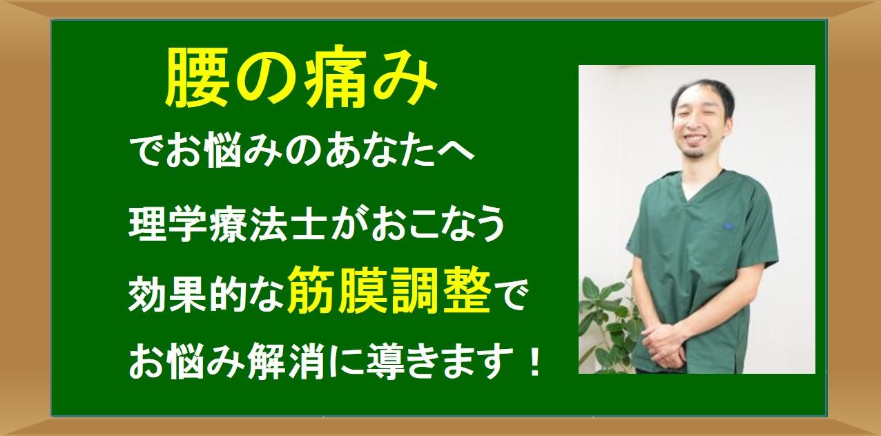 仙台の整体で腰痛に筋膜を施術するルーツ
