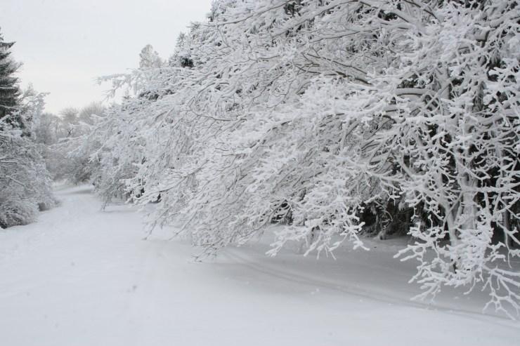 snowy-feb-day-in-maudsley-043