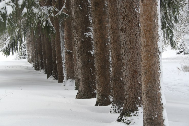 snowy-feb-day-in-maudsley-068