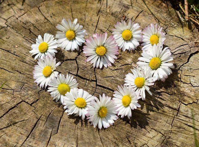 عکس گل خوشگل