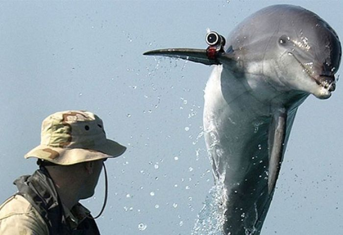 Israel Utiliza Delfines Con Fines Militares