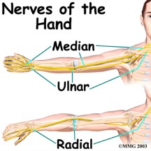 hand_anatomy_nerves01
