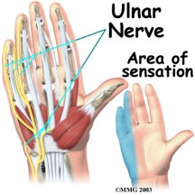 hand_anatomy_nerves04