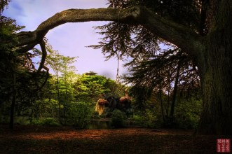 Shibari suspension from tree