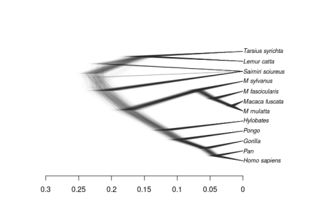 the estimated evolutionary history of primates
