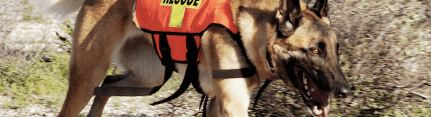 Service Dogs, Working Dogs, Therapy Dogs, Emotional Support Dogs: What's the Difference?