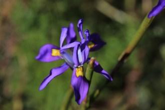 Postberg flowers-1538