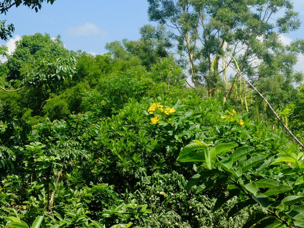 Inde#6 : traversée des backwaters et découverte des plantations de thé à Kumily