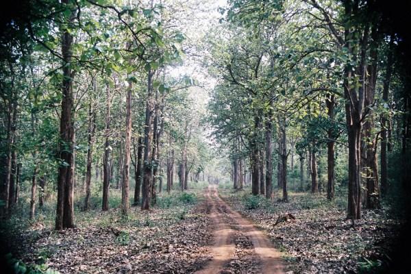 Inde#5 : à la recherche des éléphants sauvages au parc Wayanad