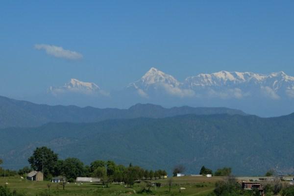 Volontariat en Inde : planter du romarin dans l'Himalaya