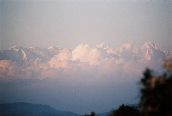 Forêt de pins et monts blancs himalayens (Argentique)