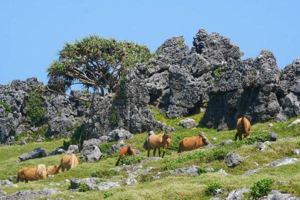 Falaises, camping et chevaux sauvages dans le Pacifique : bienvenue à 'Eua (2)