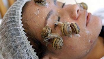 Snail slime and bee glue – say what?
