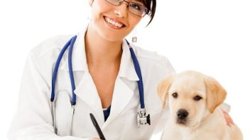 Can a Vet be a good alternative to your Dermatologist?