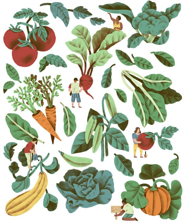 Jeannie-Phan-Illustration-Montecristo-Garden.jpg