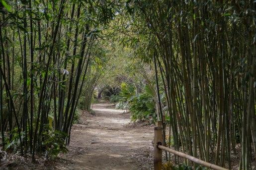 Rocha_4March17_Bontantic Garden 110001