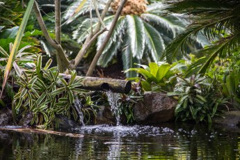 Rocha_4March17_Bontantic Garden 140001