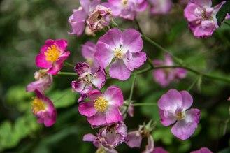 Rocha_4March17_Bontantic Garden 190001