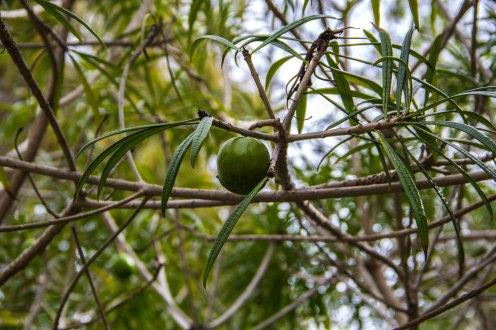 Rocha_4March17_Bontantic Garden 220001