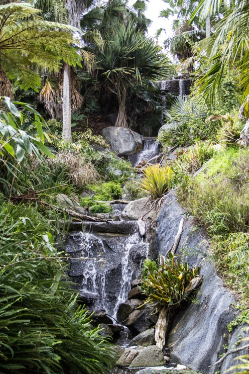 Rocha_4March17_Bontantic Garden 280001